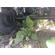 Трал Чмзап 99065-020-К53 – фото 5